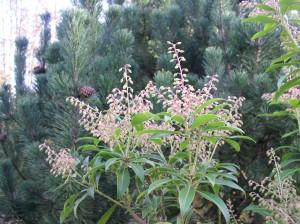 Conférence sur les plantes sauvages comestibles