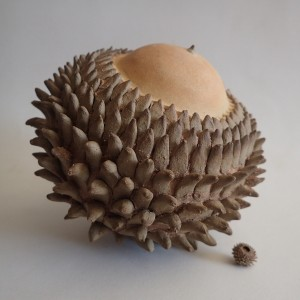 """[Report] Exposition """"La terre des Graines"""" par Anne Tassin (poterie, végétal, dessin)."""